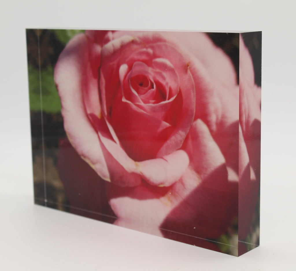 Tilted view of Acrylic block depicting close up view of pink flower