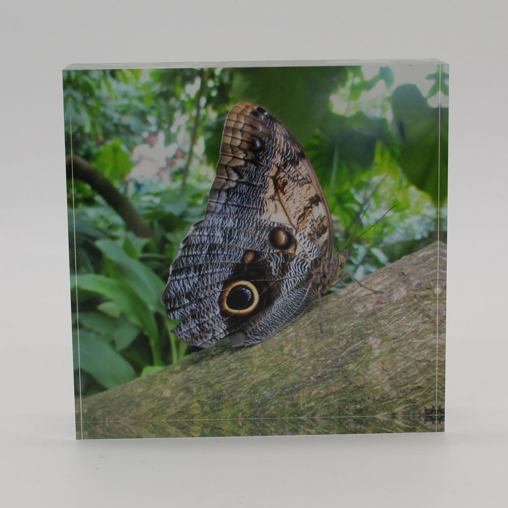 Acrylic block picture of moth butterfly on a tree limb