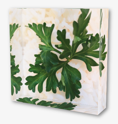 "4""x4"" Acrylic block with an image of a green herb against white rice"