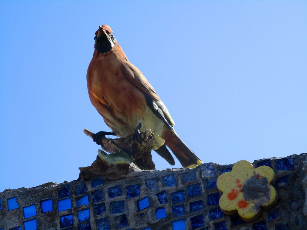 Photograph on acrylic picture of orange bird perched on blue mosaic tile wall against blue sky backdrop