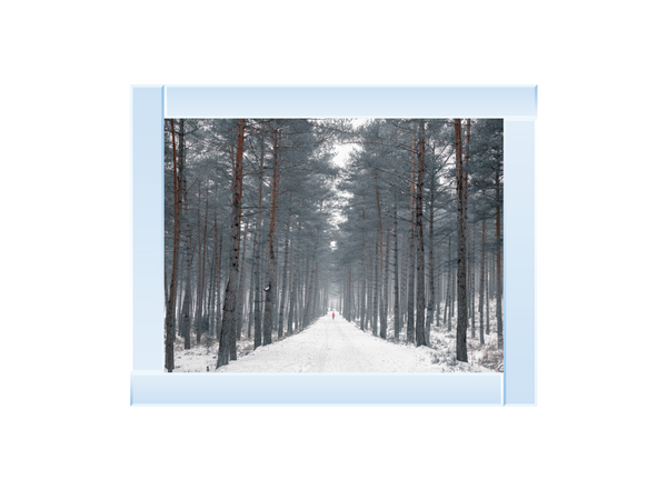 Pathway through snowy forest
