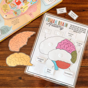 Human Brain Anatomy Printable Puzzle