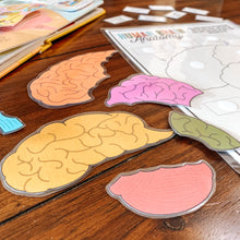 Load image into Gallery viewer, Human Brain Anatomy Printable Puzzle