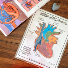 Load image into Gallery viewer, Human Heart Anatomy Printable Activity & Vocabulary - Arrows And Applesauce