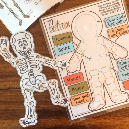 Skeleton Anatomy Printable Activity - Arrows And Applesauce