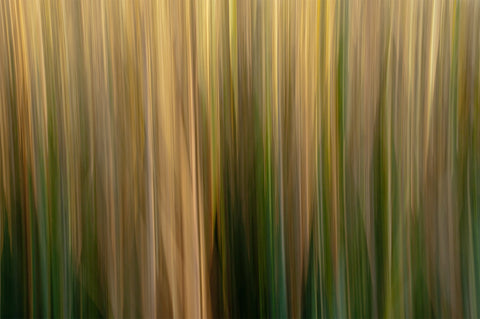 Marsh Reeds #72819- John Duckworth