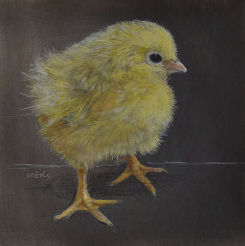 Chicky Licky- Jane Ingols