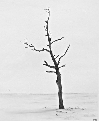 Beach Tree - Richard Bowers