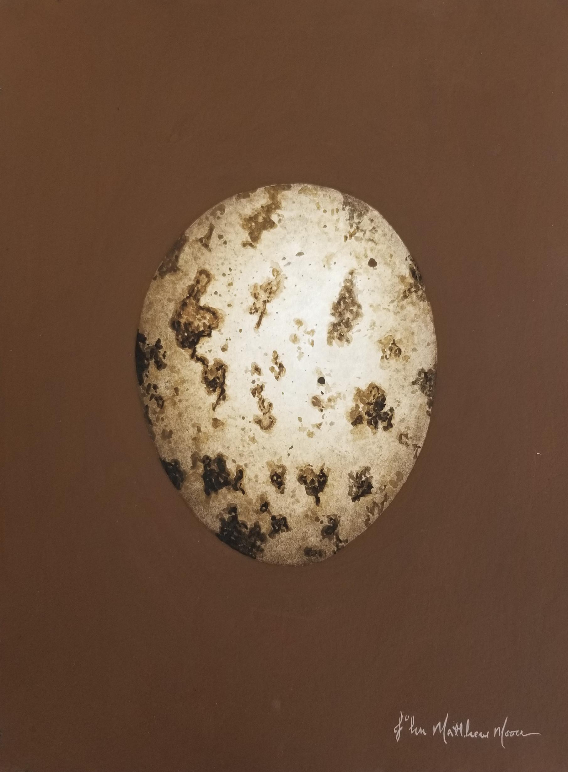 Buzzard Egg