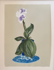 Blue Orchid Winter