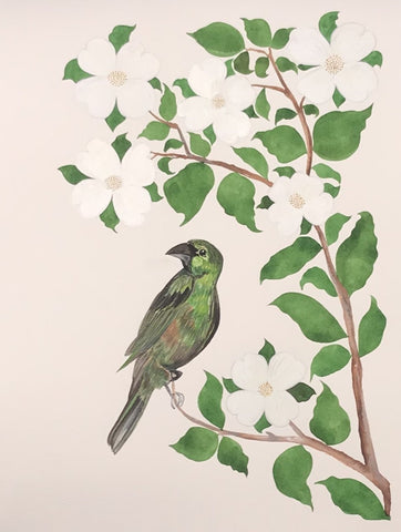 Green Grosbeak & Dogwood