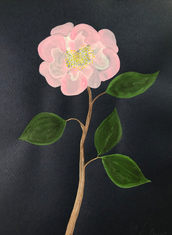 Pink Camellia on Navy