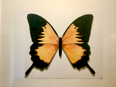 Butterfly Study 3- Richard Bowers