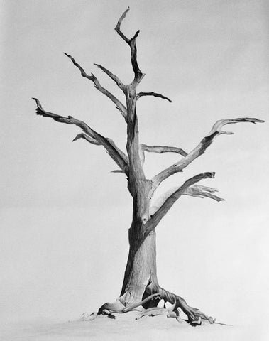 Desert Tree- Richard Bowers