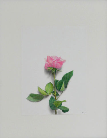 Rose Study - Richard Bowers