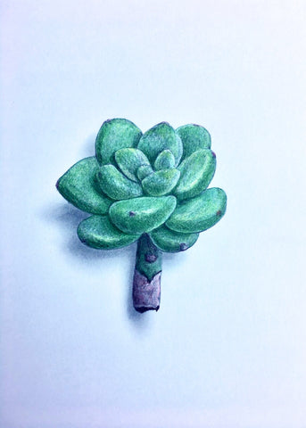 Succulent Study 1 - Richard Bowers