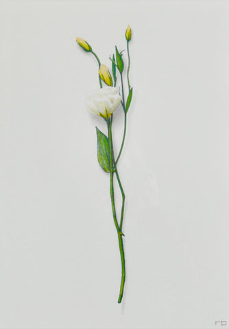 White Flower Study 1- Richard Bowers