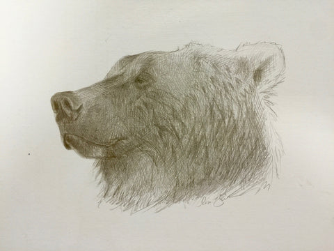 Sleepy Grizzly - Lisa Gleim