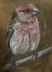 Housefinch 1- Jane Ingols