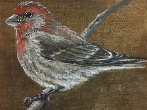 Housefinch 2- Jane Ingols