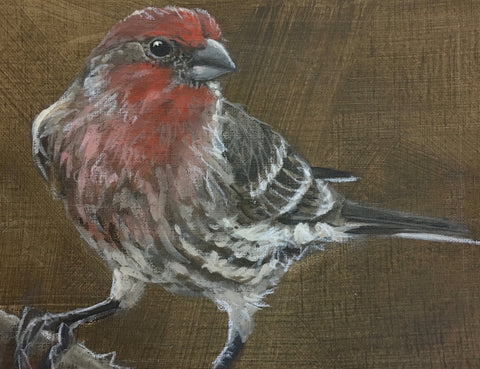 Housefinch 3- Jane Ingols