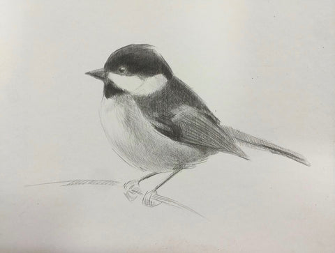 Carolina Chickadee - Lisa Gleim