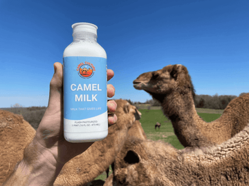 The Healthy Fat in Camel Milk