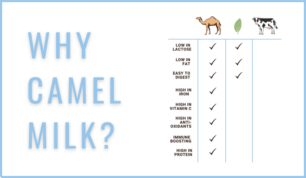 Why drink camel milk? This chart shows why camel milk is better than cow milk.
