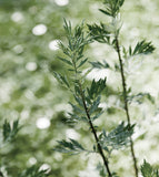 BONAJOUR Mugwort Cream Calming Mask is available at www.Barefection.com. Visit us for product details and our latest offers!