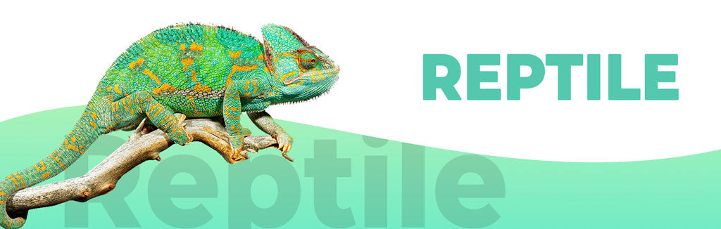 Reptile Food & Supplies