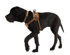 Carhart Dog Walking Harness
