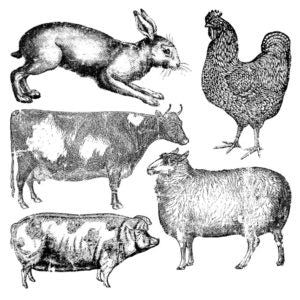 'FARM ANIMALS' IOD DECOR STAMP (12″X12″)