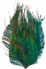 One Package Peacock Feather Pad - Natural 8cm-10cm (1000H)