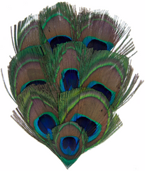 One Package Peacock Feather Pad - Natural Peacock Eye 8cm-10cm (1002H)