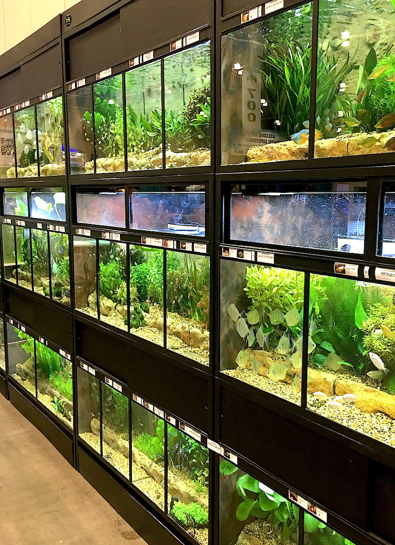 The Success of our THRIVE Fish Enclosures