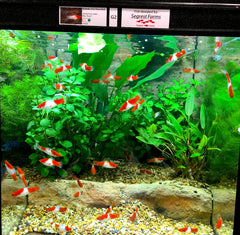THRIVE Freshwater Fish Enclosures