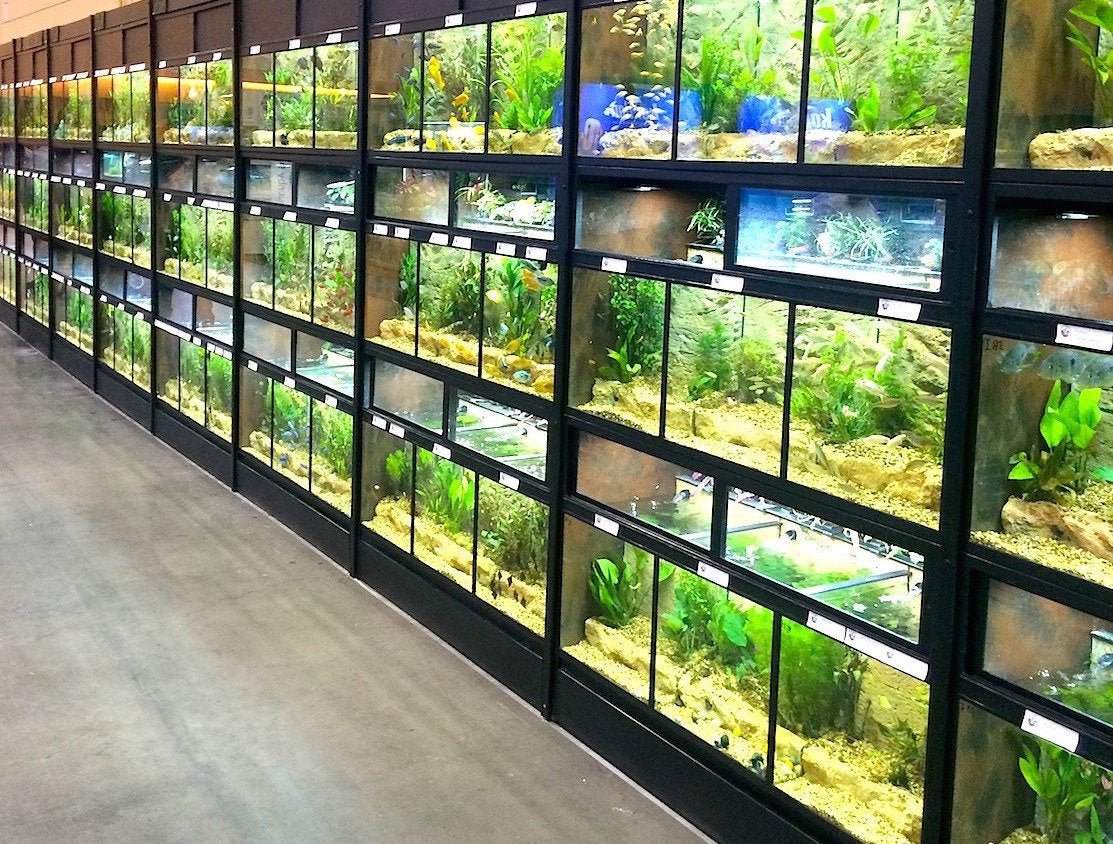 Freshwater Fish Commercial Enclosure