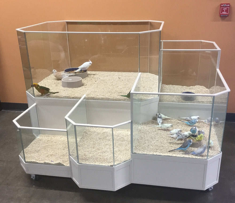 Small Parrot or Bird Display