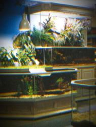3D Aquarium Paludarium Combination in a Pet Store