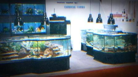3D Aquariums at a Tradeshow