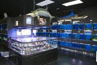 Marine 3D Aquarium in a Pet Store