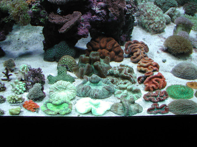 Closeup of Marine 3D Aquarium in a Marine Fish Store