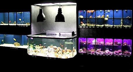 Marine 3D Aquarium between Marine Fish and Coral Setups