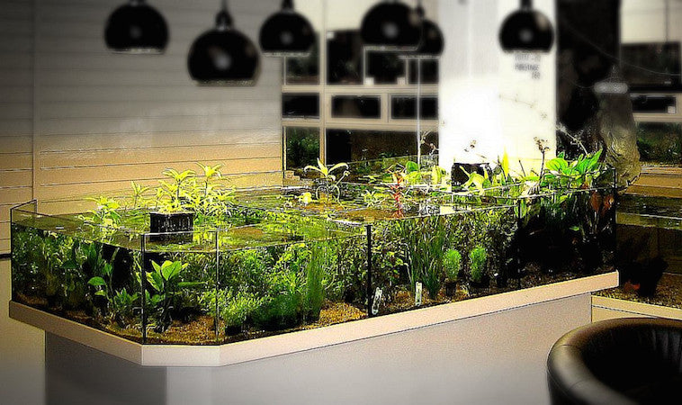 3Tier 3D Aquarium Setup for a Freshwater Fish Store in Norway