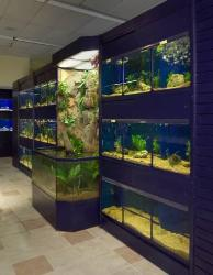 3D Aquarium in between Freshwater Enclosures