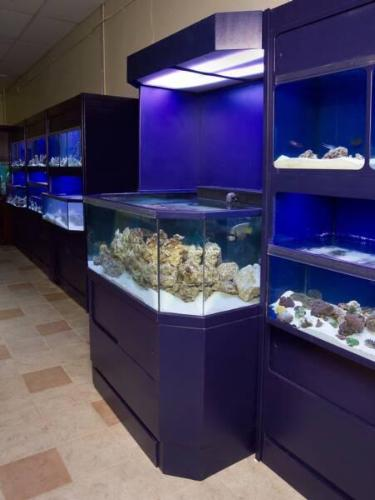 3D Aquarium for Marine Life display between Marine Fish Enclosures