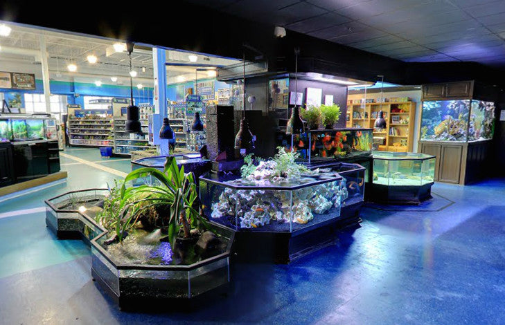 "3D Aquarium Display ""Long Beach Show"""