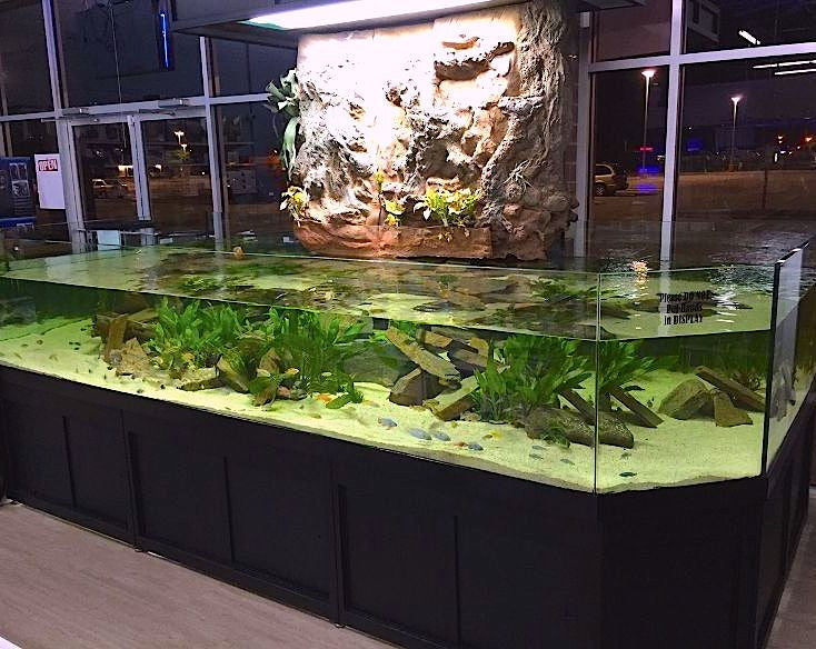 3d cichlids virginia beach das aquariums for Fish store virginia beach