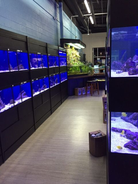 Commercial Marine Fish Display Racks