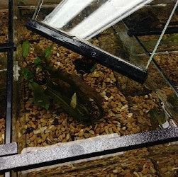 Betta and Specialty Freshwater Fish Enclosure